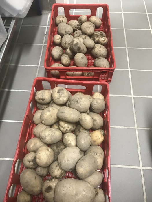 25lbs of Potatoes from VCS Garden